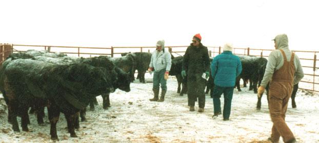 Nichols Farms